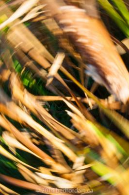 photography,blur motion,art,blog series