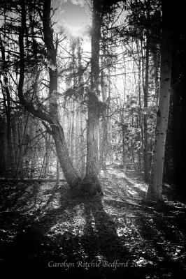 photo, woods, trees, light, sun, black and white, shadows
